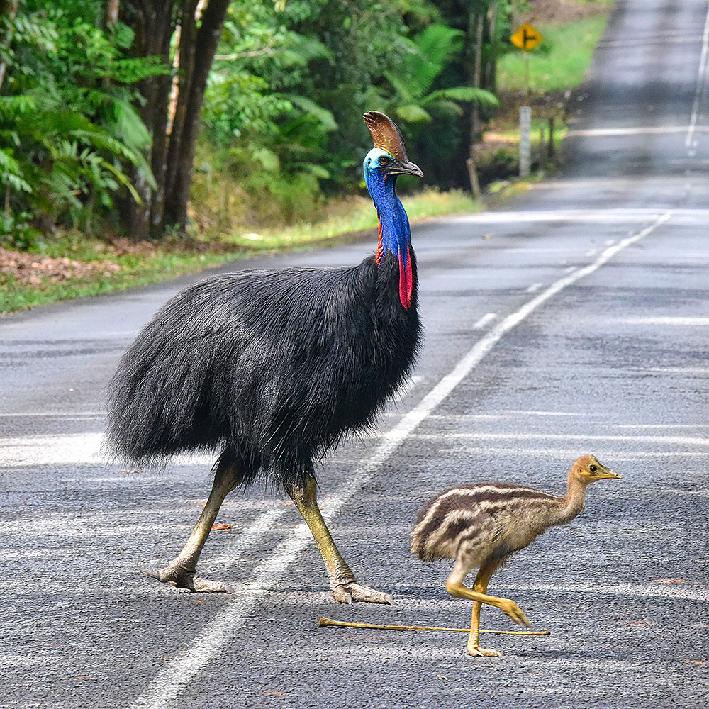 Cape Tribulation Day Tour from Cairns and Port Douglas - (07) 4032 0500