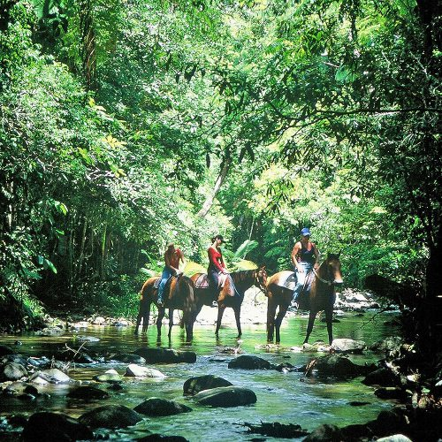 Overnight Tours to Daintree and Cape Tribulation